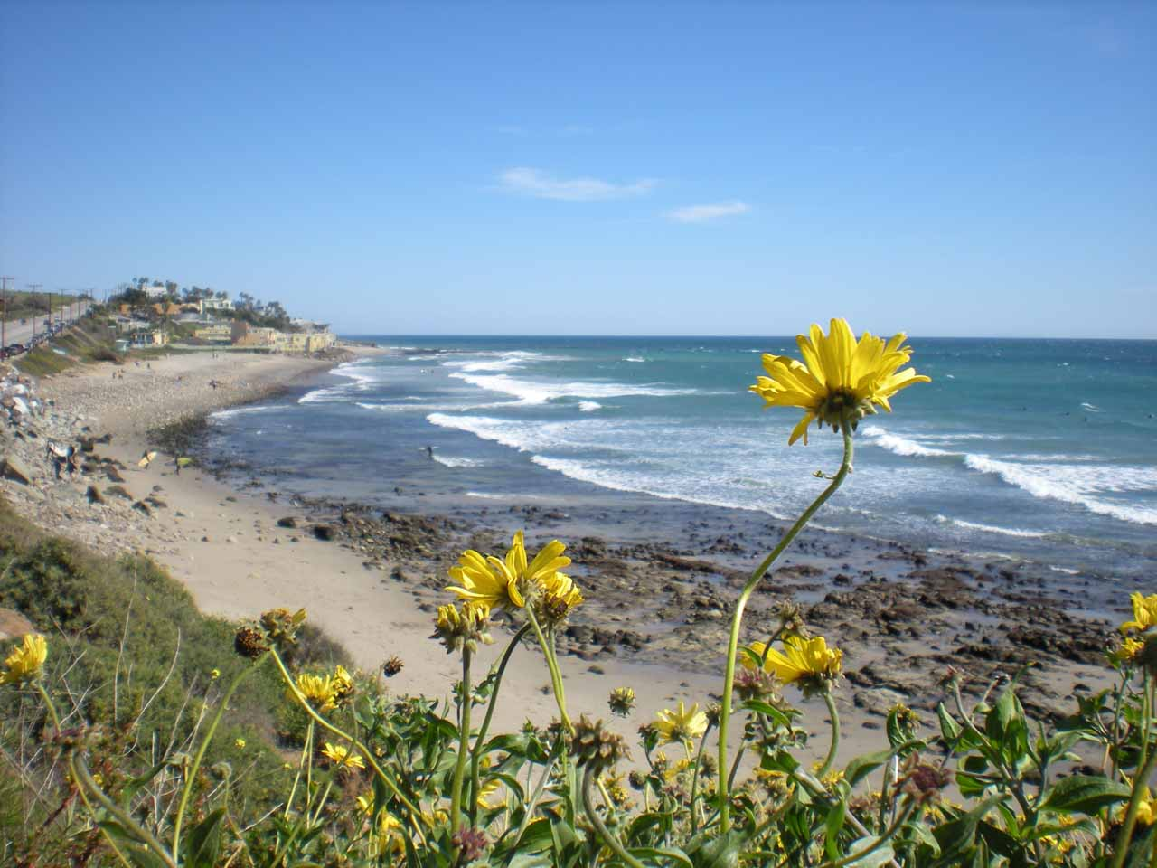 Flowers blooming along the coast of Malibu