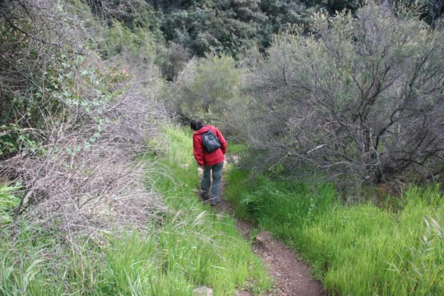 Newton_Canyon_Falls_005_03072010 - Julie ducking branches from overgrowth on a narrower trail of use after leaving the Backbone Trail and pursuing the Newton Canyon Falls