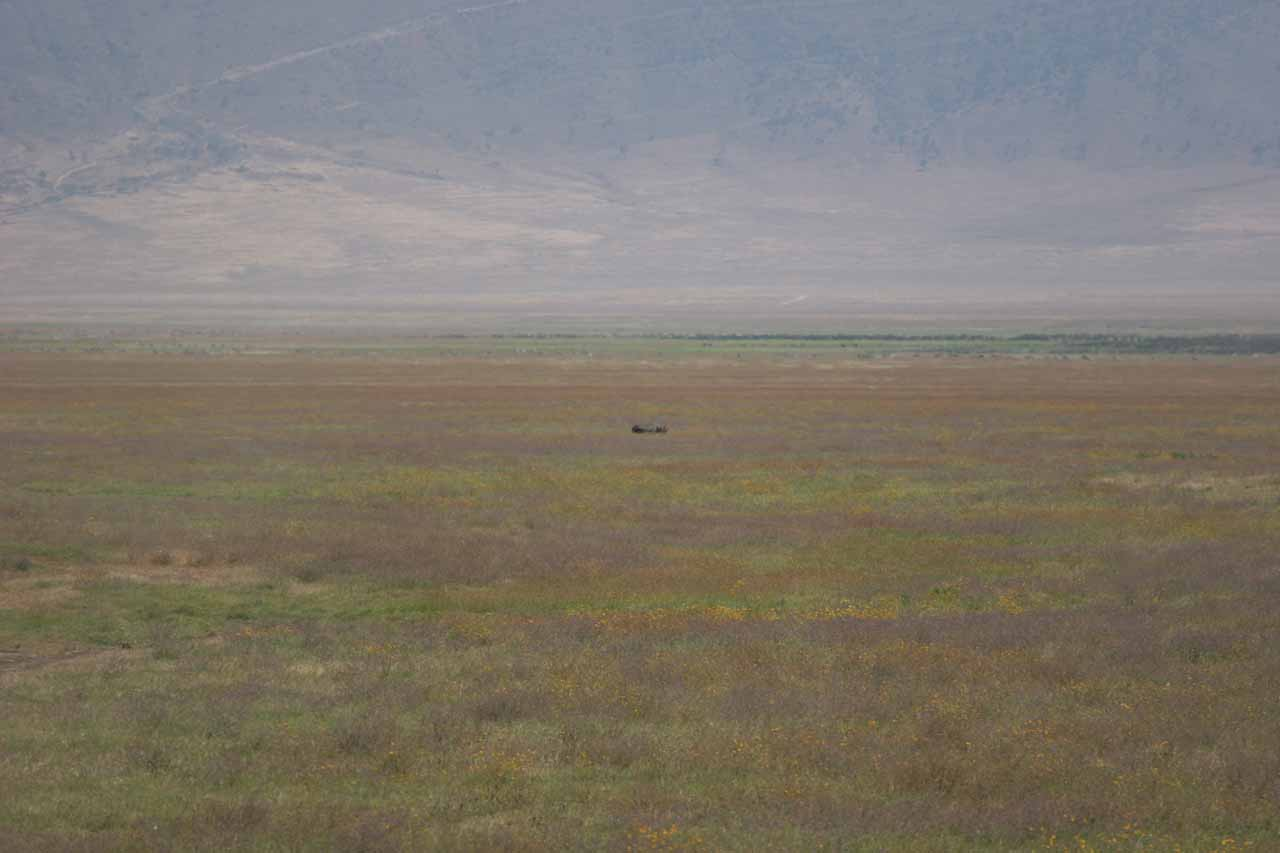 Black rhino in the distance