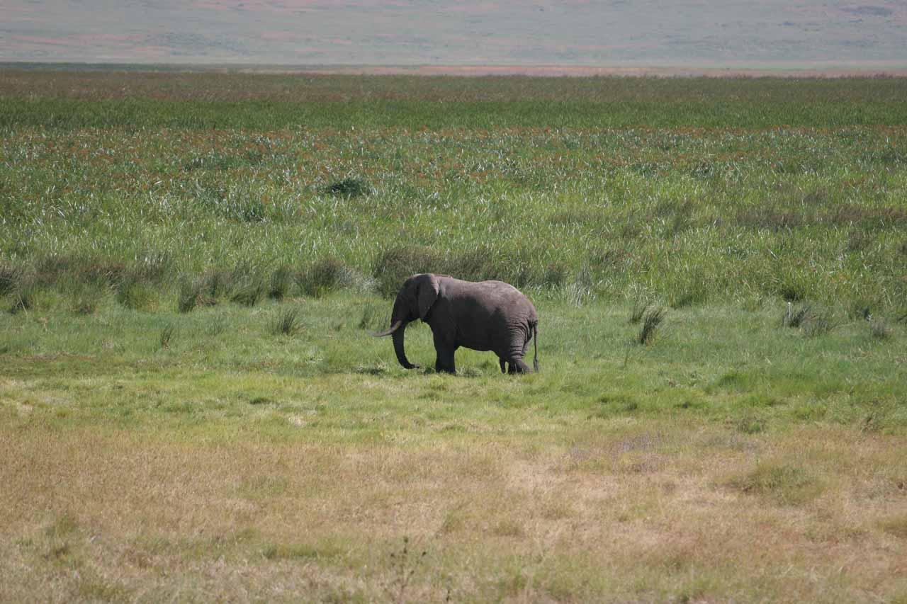 5-legged elephant