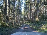Niagara_Falls_Trail_009_iPhone_04082021 - On the final stretch of the Niagara Road leading to the Niagara Falls Trailhead in Siuslaw National Forest