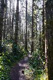 Niagara_and_Pheasant_Creek_Falls_003_04082021 - Hiking among the tall moss-covered trees along the Niagara Falls Trail