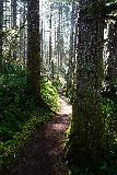 Niagara_and_Pheasant_Creek_Falls_004_04082021 - The Niagara Falls Trail weaving between more tall moss-covered trees