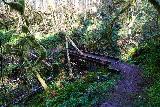 Niagara_and_Pheasant_Creek_Falls_022_04082021 - Looking back at another footbridge traversing some seasonal streams crossing the Niagara Falls Trail in Siuslaw National Forest