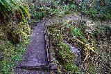 Niagara_and_Pheasant_Creek_Falls_026_04082021 - Traversing a footbridge over this seasonal creek, which actually harbored a cascade along the Niagara Falls Trail