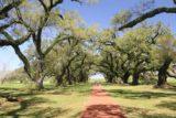 Oak_Alley_Plantation_016_03142016