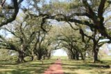Oak_Alley_Plantation_123_03142016