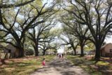 Oak_Alley_Plantation_159_03142016