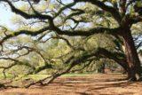 Oak_Alley_Plantation_199_03142016
