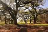 Oak_Alley_Plantation_215_03142016