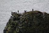 Ocean_Waterfall_telephoto_010_08142021 - Looking down at some birds perched on a coastal bluff as seen from where we got our first view of the Migandifoss Waterfall