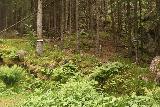Oddadalen_087_06232019 - Noticing a less-traveled trail leading to Bygdeborg Hillfort