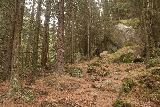 Oddadalen_090_06232019 - More rocks, moss, and pine needles on the steep ascent leading to Bygdeborg