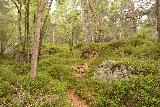Oddadalen_106_06232019 - Once I made it up the rock face, the Saga Trail to Bygdeborg then became obvious again