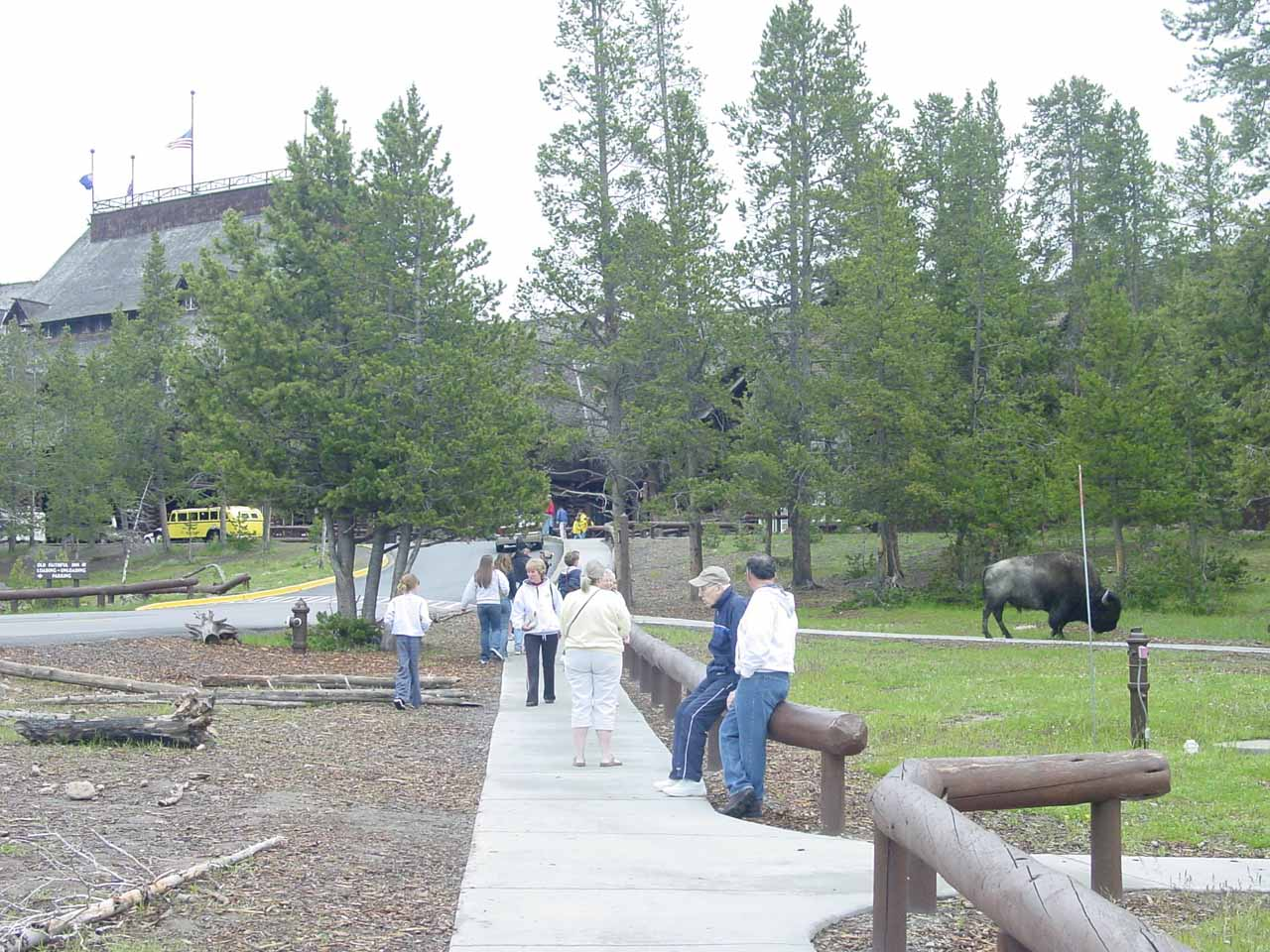 Back at the Old Faithful Inn with bison grazing around the premises