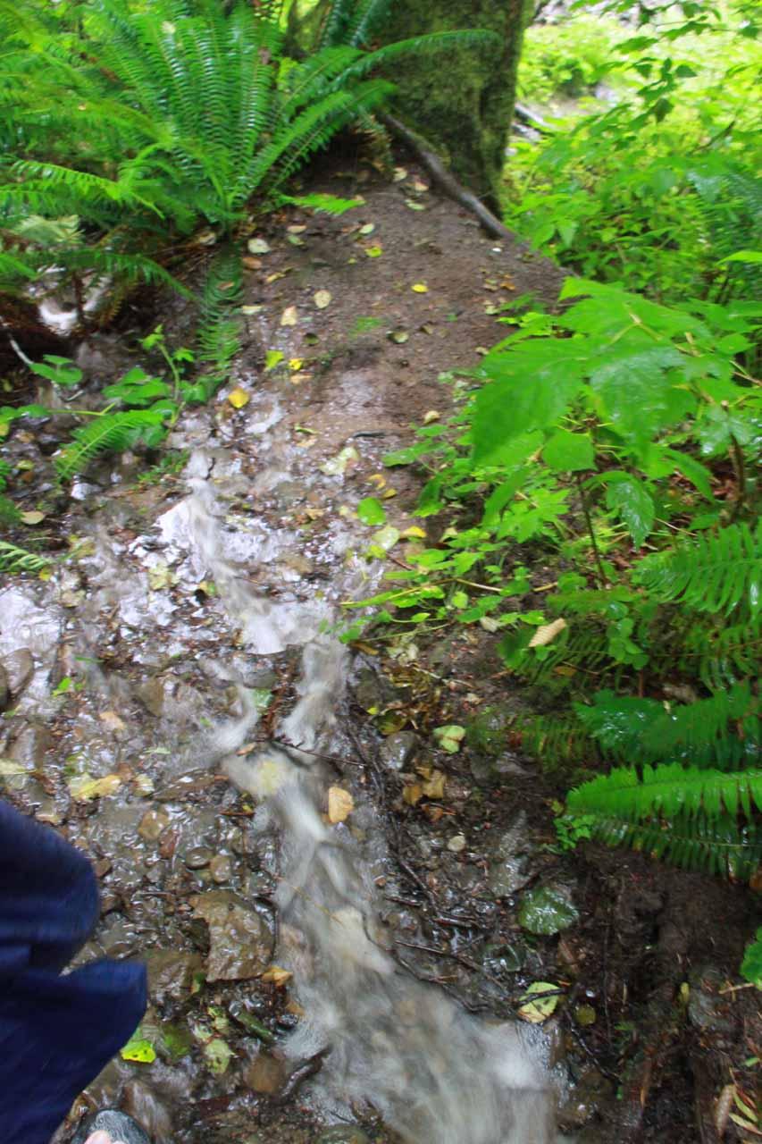 The stream I followed to Beaver Falls' base