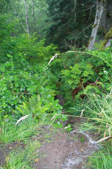 Olympic_Peninsula_161_08222011 - Looking down at the impromptu stream that just happened to flow over the scrambling path leading to the bottom of Beaver Falls
