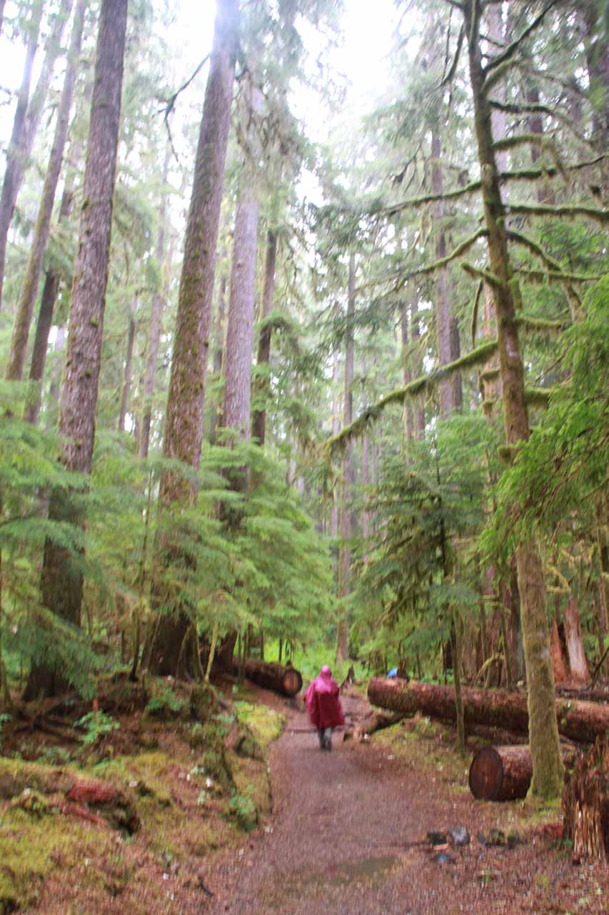 On the Sol Duc trail with our rain ponchos on