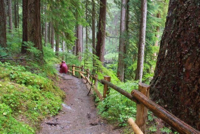 Olympic_Peninsula_171_08222011 - Julie following the railings as she approached a footbridge up ahead while enjoying the thick forest canopy sheltering us from the rain on our hike to Sol Duc Falls