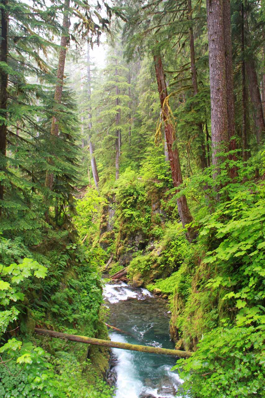 Looking downstream of Sol Duc Falls