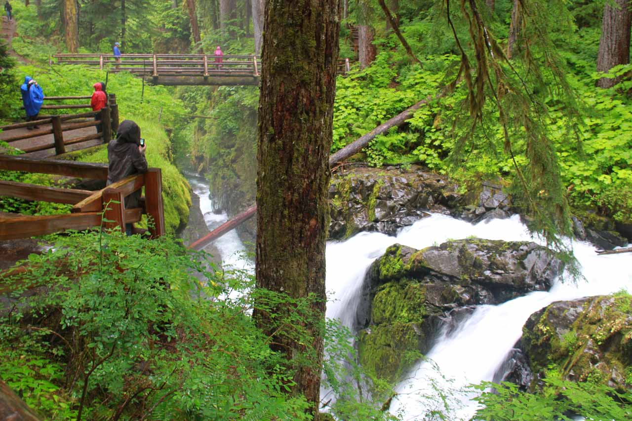 Context of the viewpoints near the brink of Sol Duc Falls