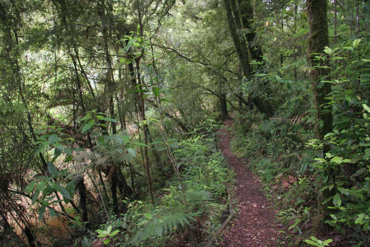 Beyond the paddocks and now hiking amongst the native bush
