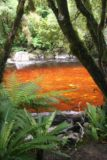 Oparara_Basin_004_12292009 - Blood red stream en route to the arch