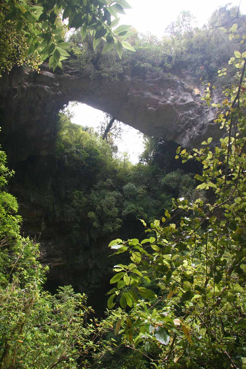 While we were in the Oparara Basin, we also visited the Moria Gate Arch, which seemed more like a cave, but it was fronted by this attractive natural arch
