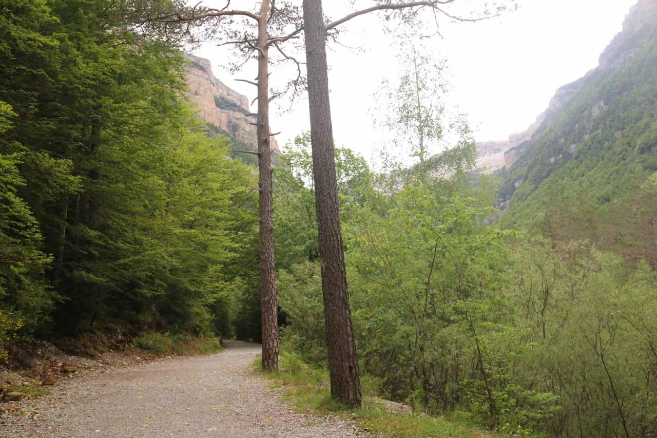 The wide trail pretty much followed along the Río Arazas
