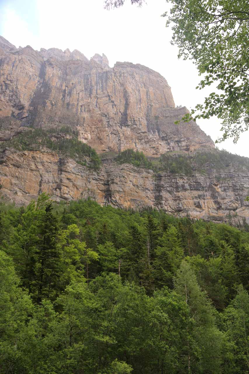 As I was getting closer to the tree line, I could see more of the imposing cliffs above the trees