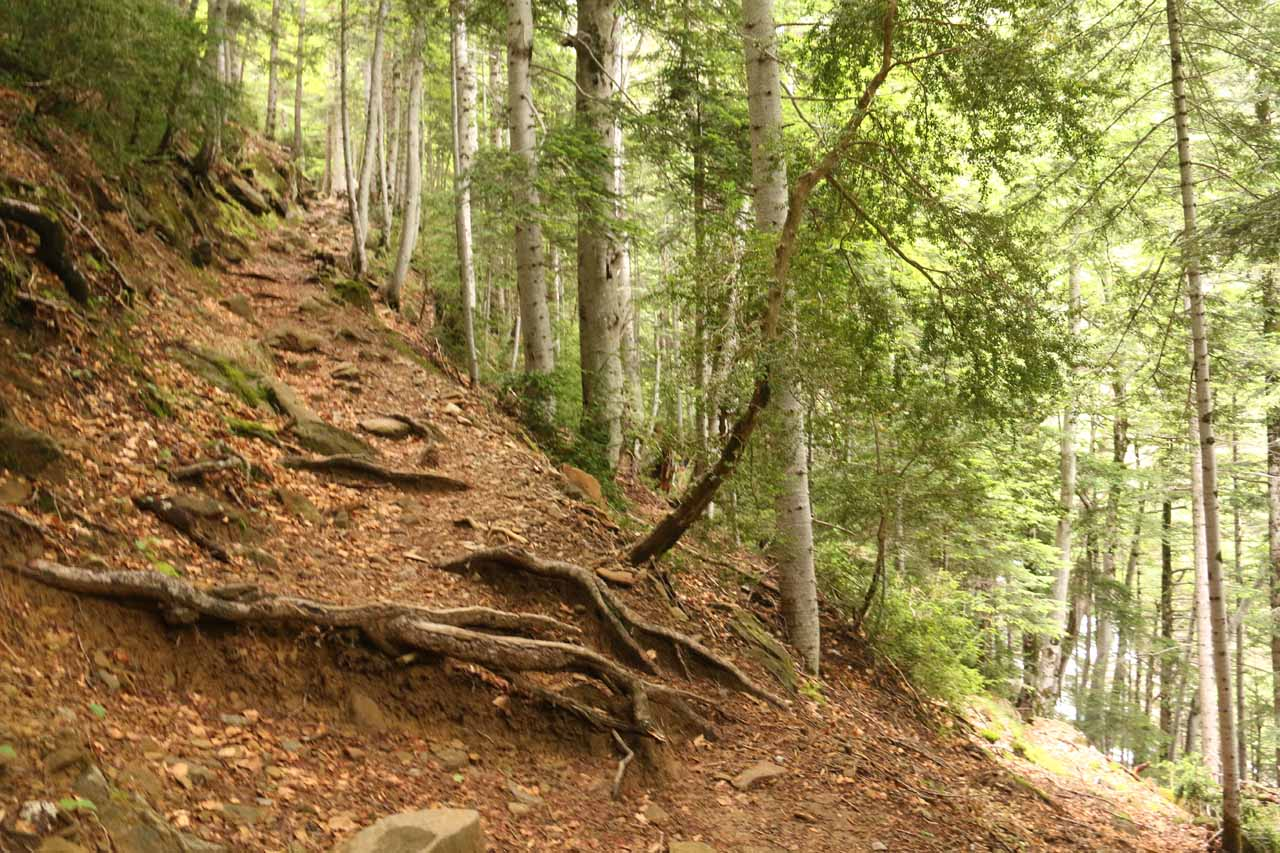 As the trail got increasingly steeper the further up I went, I also noticed spots where roots were protruding onto the trail itself, which meant that I had to be careful about not tripping here