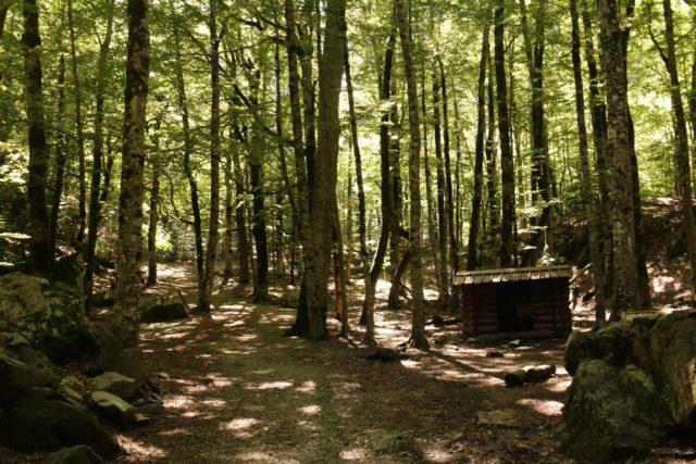 Ordesa_478_06172015 - Approaching the abrigo (hut) within the Bosque de las Hayas (beech forest)
