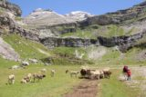 Ordesa_708_06172015 - Hiking around a fairly sizeable herd of cows as I was approaching the Circo del Soaso