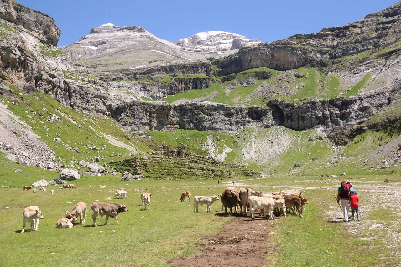 Hiking around a fairly sizeable herd of cows as I was approaching the Circo del Soaso