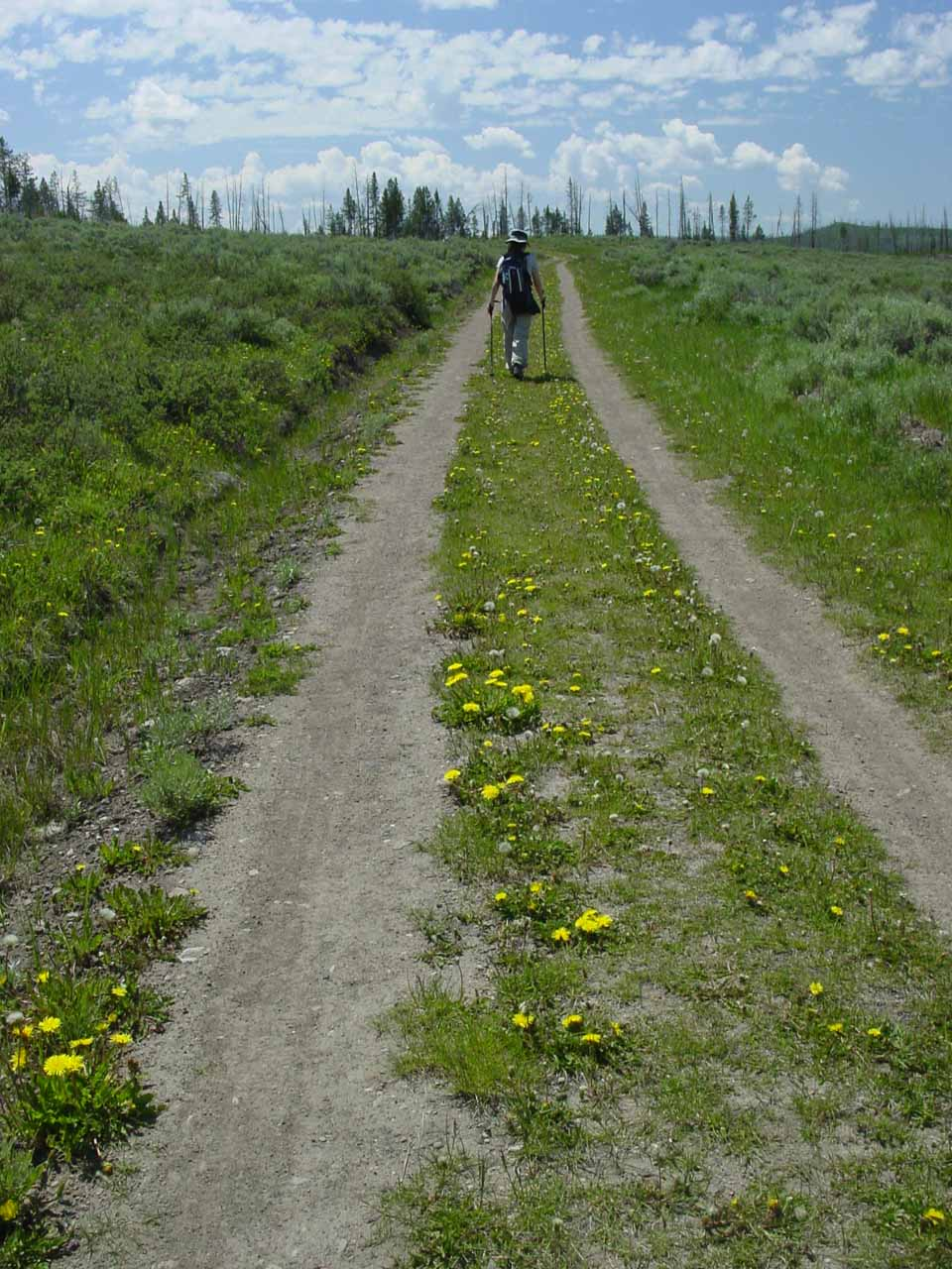 Julie walking on the 4x4 road with wildflowers in bloom before the thunderstorm overtook us