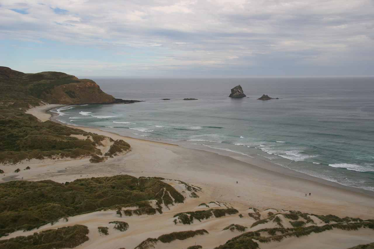 Roughly 16km east of Dunedin on the Otago Peninsula was the beautiful Sandfly Bay where we also got to see many New Zealand fur seals trying to rest on the sandy beach