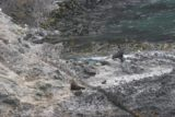 Otago_Peninsula_022_12222009 - A couple of fur seals in the rocky area by the ocean