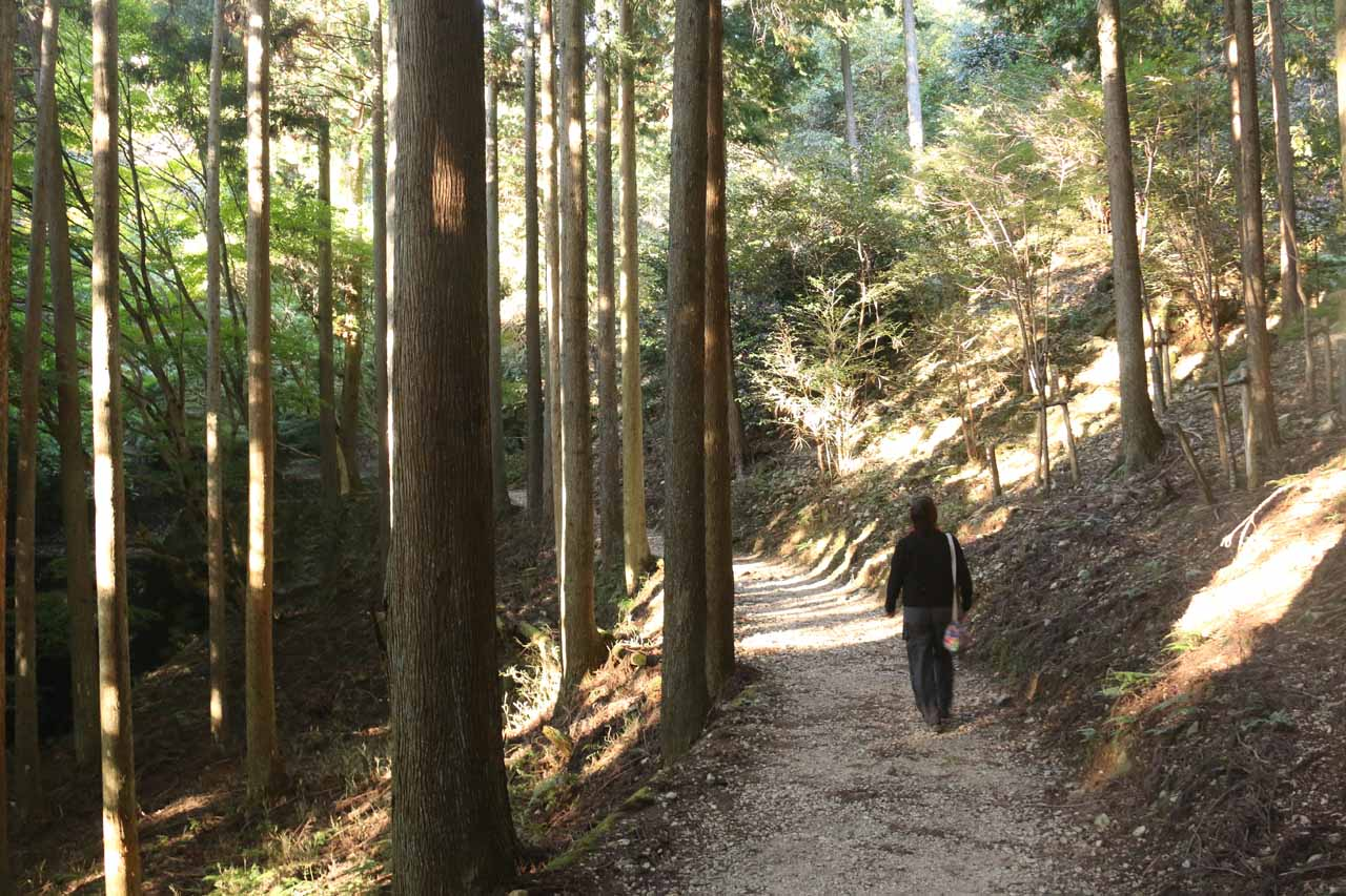 Now Mom and I were on a more conventional trail leading through tall trees and eventually to the Soundless Waterfall