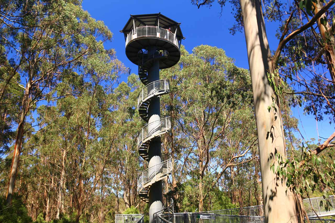 Not far from Beech Forest and the Hopetoun Falls was the Otway Fly Tree Top Walk, which was said to be the tallest such walk in the world