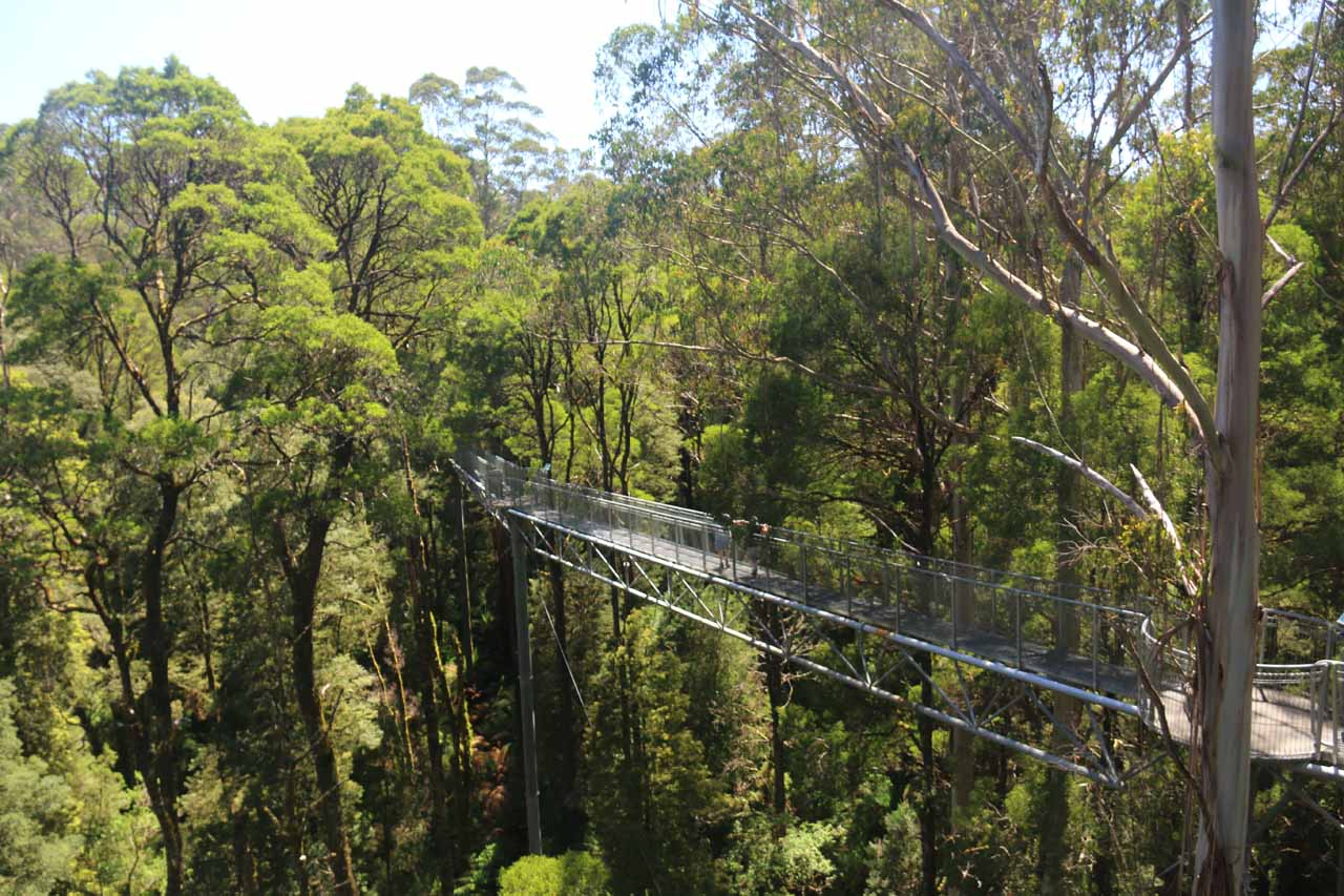 To the west of Barramunga along the Turtons Track Road (C159) was the Otway Fly Tree Top Walk near Beech Forest. It was said to be the tallest such walk in the world