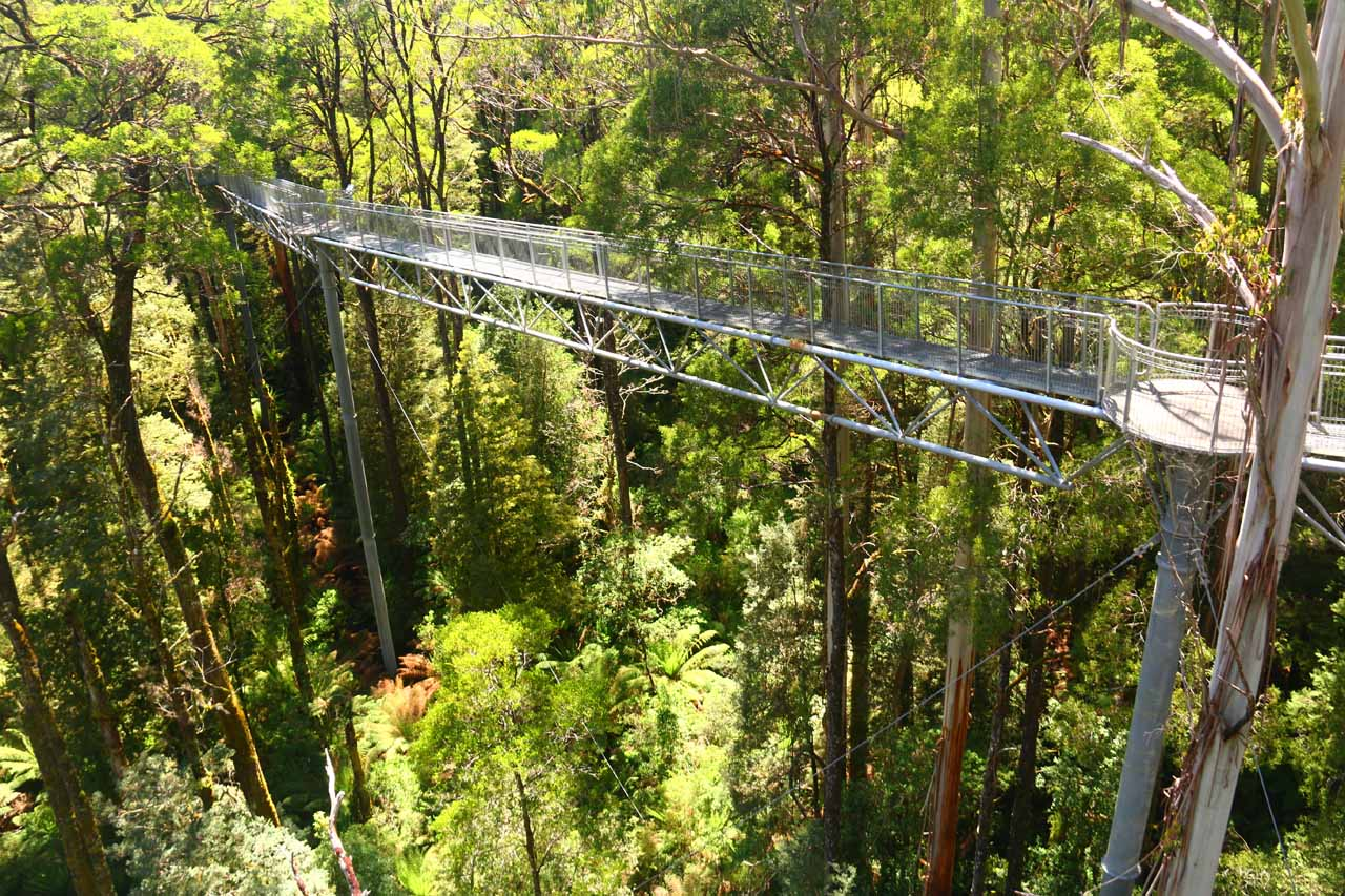 Roughly 4km before the car park for Triplet Falls was the Otway Fly, which was said to be the tallest tree top walk in the world and provided a unique perspective of the Otway Rainforest