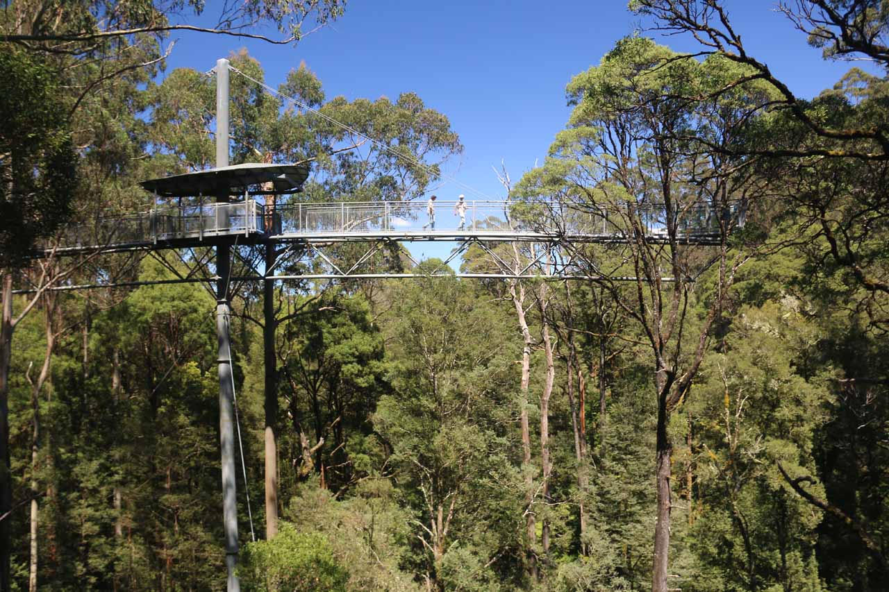 Not far from Beech Forest and the Beauchamp Falls was the Otway Fly Tree Top Walk, which was said to be the tallest such walk in the world