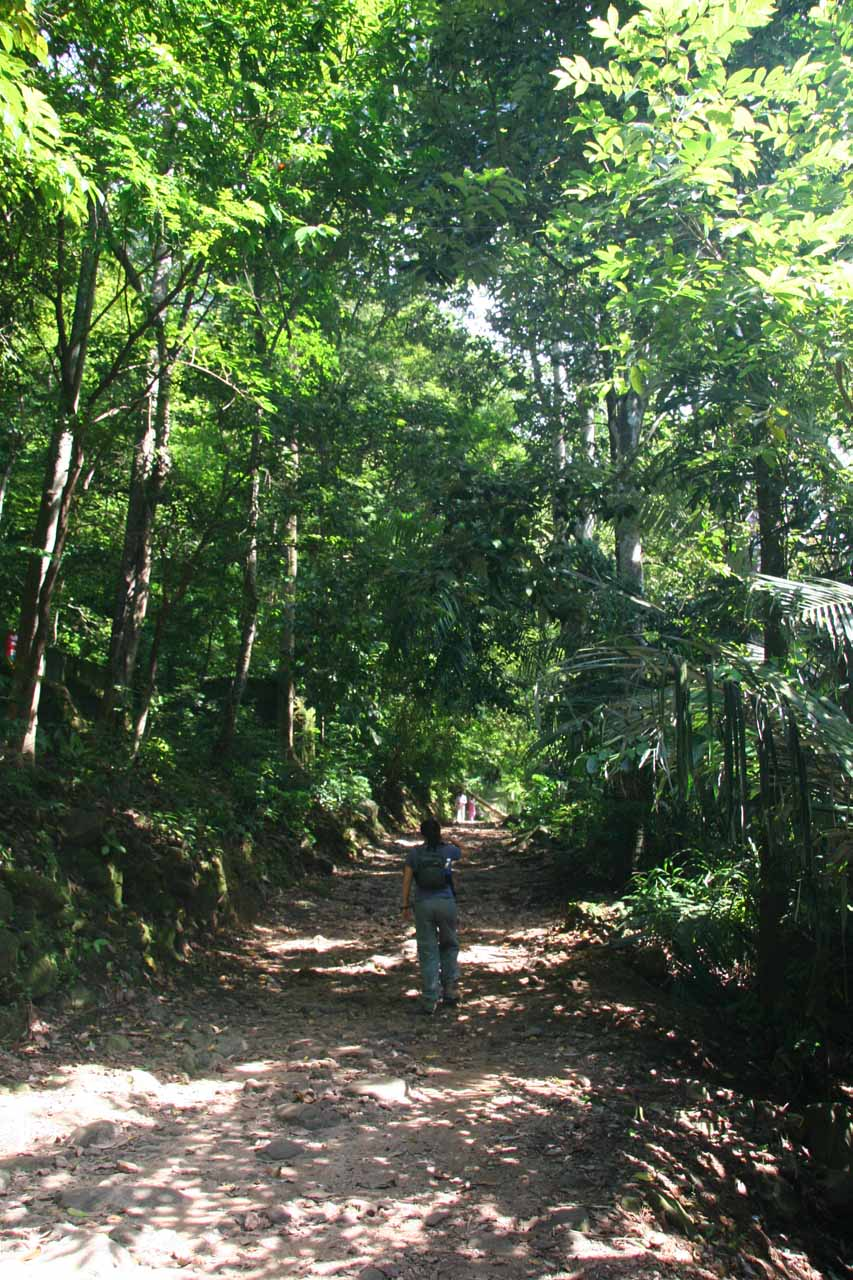 Julie on the lush trail leading closer to Palaruvi Falls
