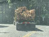 Panther_Creek_Falls_001_iPhone_06242021 - Following this logging truck on the way south along the Wind River Rd towards the Panther Creek Falls