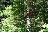 Panther_Creek_Falls_003_06242021 - Signage suggesting that the trail to the Panther Creek Falls is close by