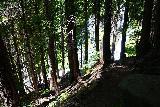 Panther_Creek_Falls_028_06242021 - The final descent towards the base of the Panther Creek Falls