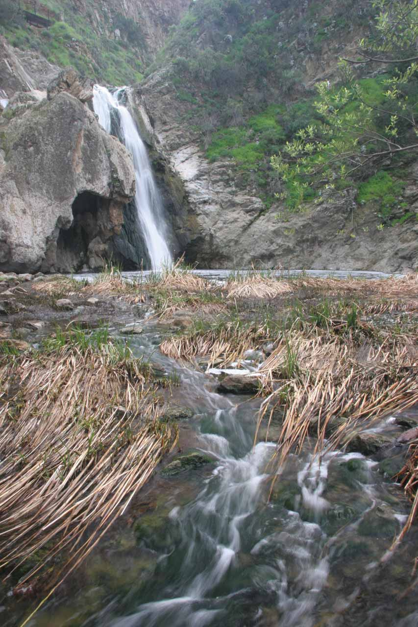 Paradise Falls and reeds growing in front of it