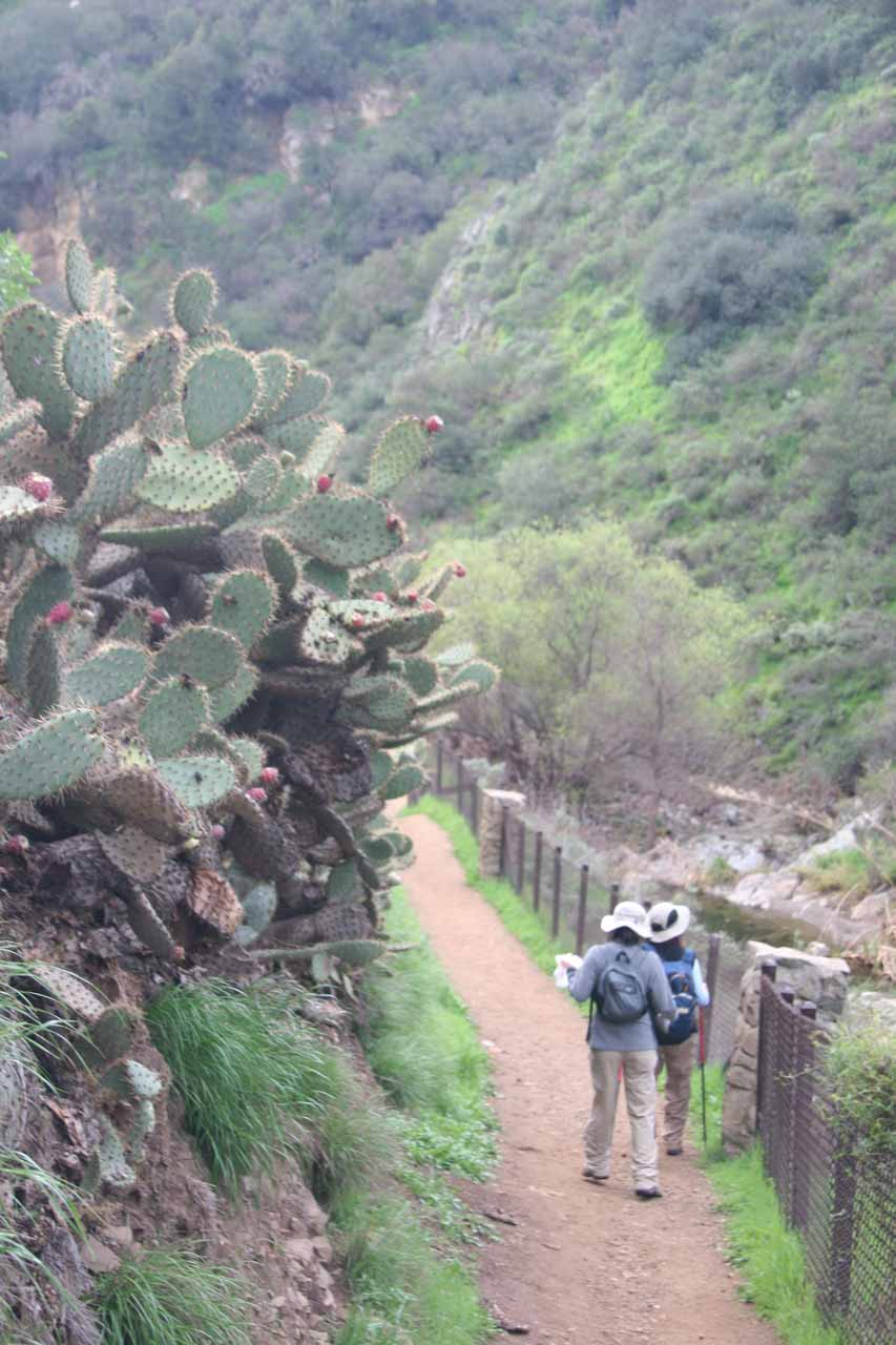 Passing by some cacti along the trail