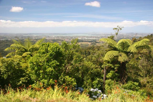 Parkinsons_Lookout_003_01092010 - After our hike to Fairy Falls, we headed back towards Auckland but not before making a stop at the Parkinson's Lookout, where we got this view towards Auckland
