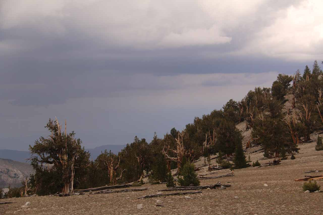 Looking towards some menacing storm clouds approaching us as we were at the Patriarch Grove of the Ancient Bristlecone Pine Forest